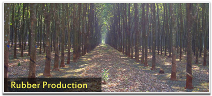 Rubber Production
